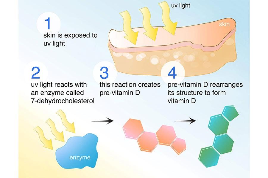 Chức Năng Tổng Họp Vitamin D ở Da