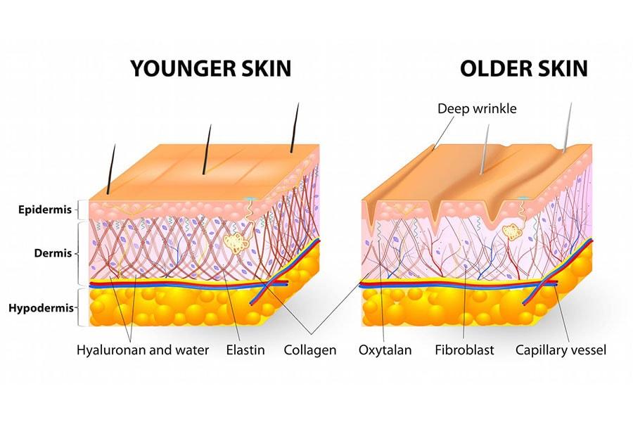 Collagen được Tạo Ra Từ đâu