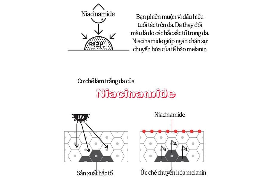 Thành Phần Niacinamide Thần Thánh