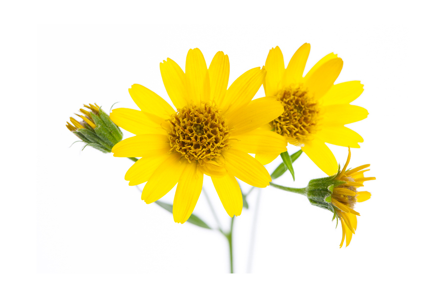 Chiết xuất hoa cúc trong serum Care:nel giúp hạn chế kích ứng cho da
