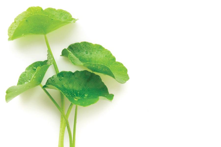 Serum Niacinamide Zinc chứa chiết xuất rau má giúp ngăn ngừa mụn và các vết thâm hiệu quả